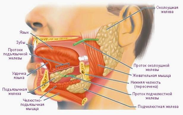 нервы запах изо рта