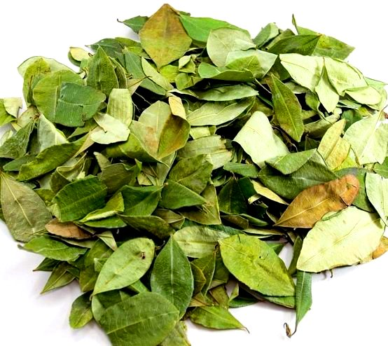 кофейные листья