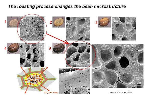 Изменение структуры кофейного зерна при обжарке